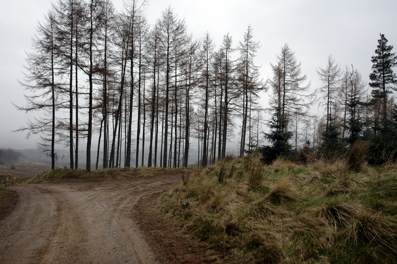 trees_scotland